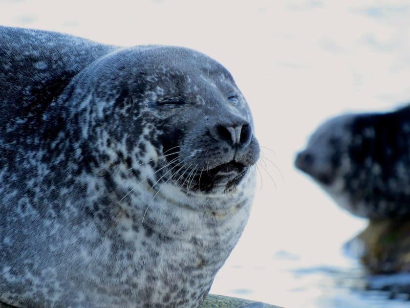 Day 5 - sleepy seals