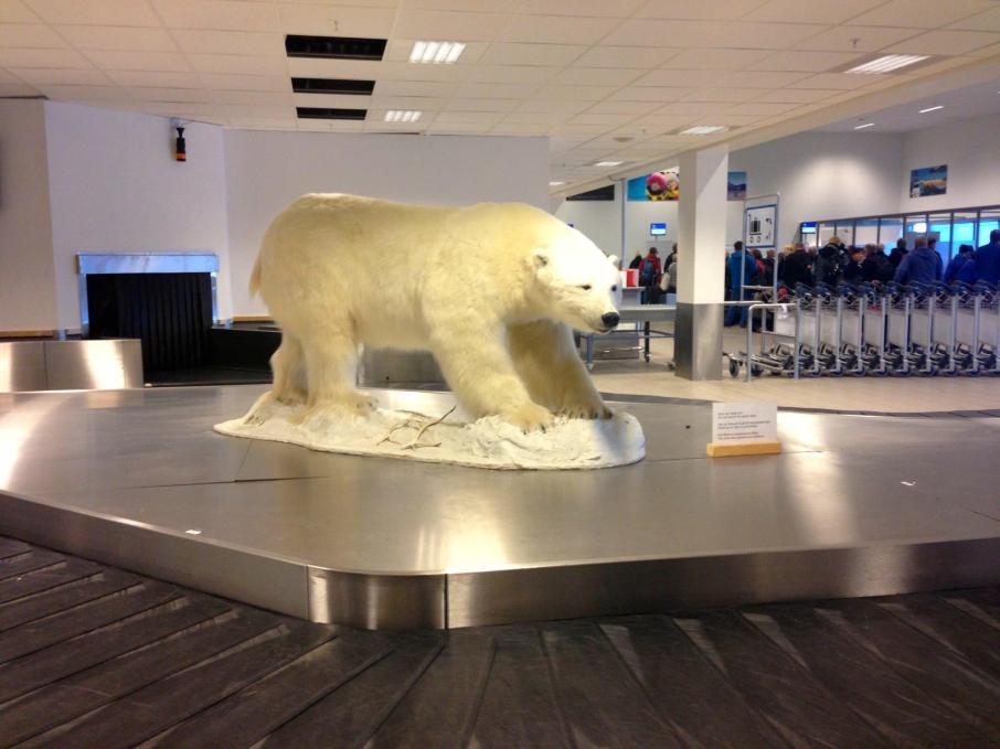 Polar Bear in Longyearbyen Airport