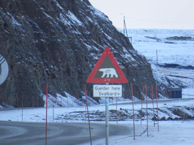 Polar bear warning in every corner of Longyearbyen (and other settlements in Svalbard too)